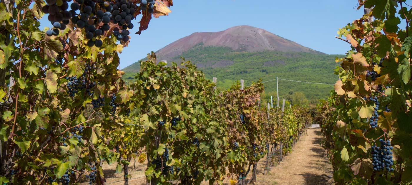 Risultati immagini per azienda vinicola vesuvio